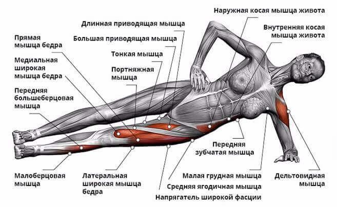 Какие мышцы задействованы в боковой планке